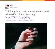 The New Twitter Revamp