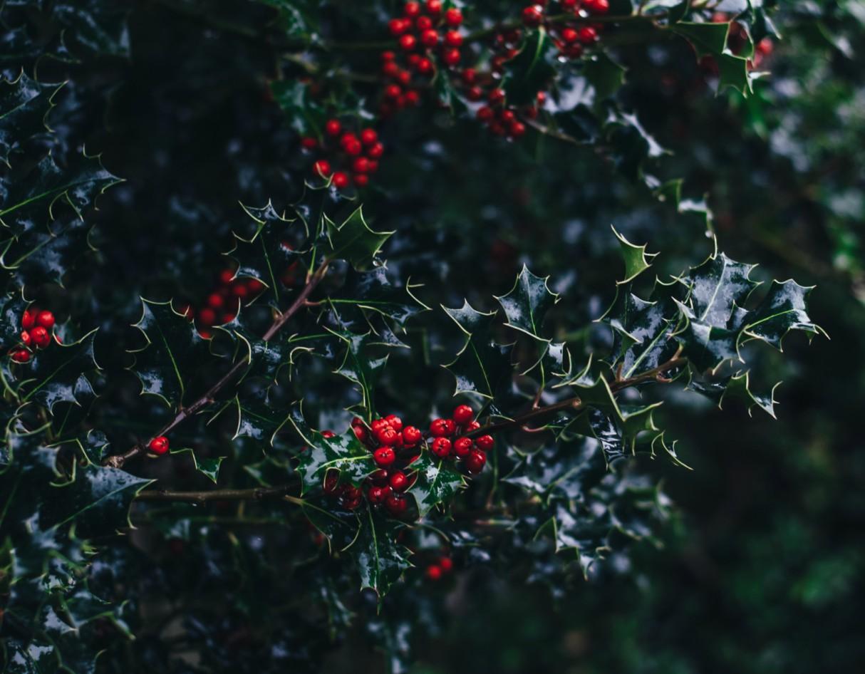 christmas-eco-friendly-environment-decorations