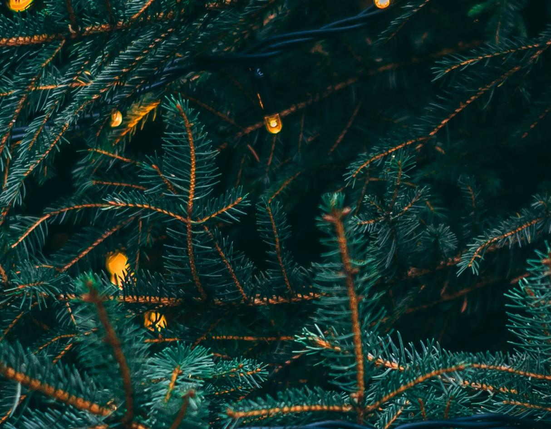 christmas-eco-friendly-environment-led-lights