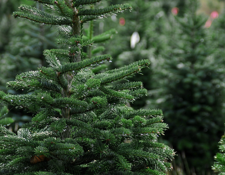 christmas-eco-friendly-environment-tree
