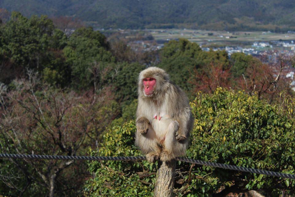 Arashiyama Monkey Park Iwatayama Kyoto